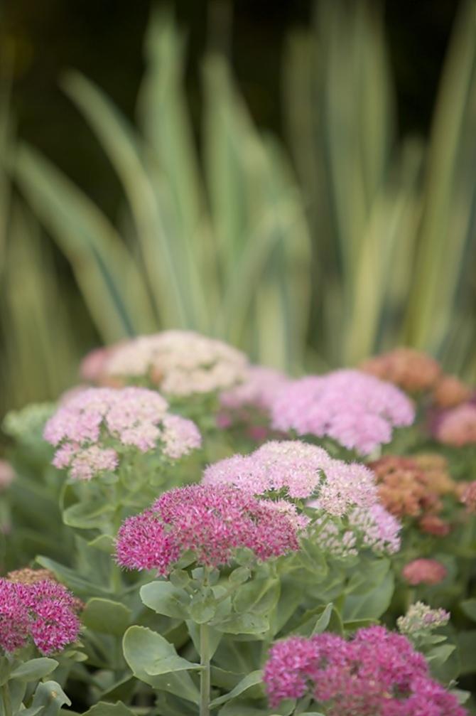 Peter Fudge Gardens | Tempo da Delicadeza
