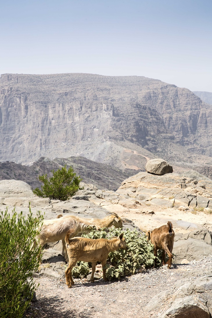Anantara Jabal Akhdar Resort