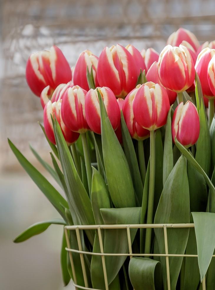 Keukenhof 2018 - Romance in Flowers